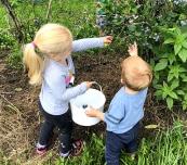 Ellie & Charlie Picking Blueberries